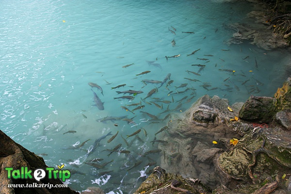 เที่ยวน้ำตกเอราวัณ พร้อมมิตรสตูดิโอ สะพานข้ามแม่น้ำแคว